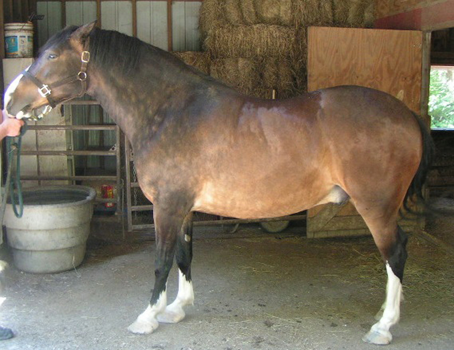 IR horses are often leptin resistant.  They should not be fed free choice.